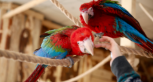 papugarnia gdańsk promo video
